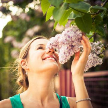 Woman smelling lilac flowers on tree