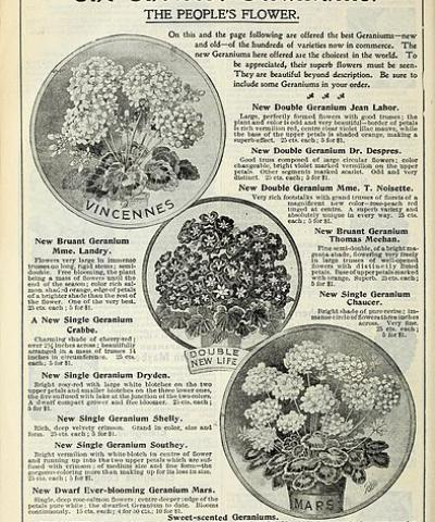 Our new guide to rose culture, Dingee & Conard Co.; Henry G. Gilbert Nursery and Seed Trade Catalog Collection 1891