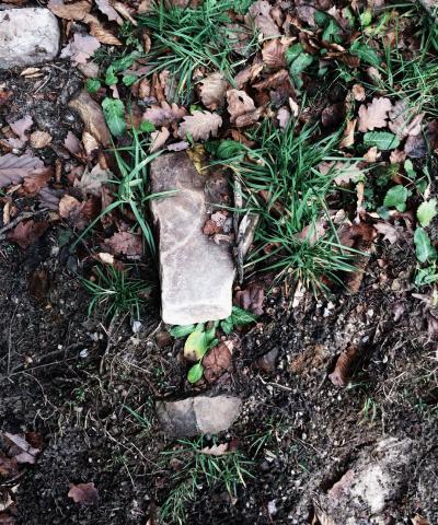 beautiful soil