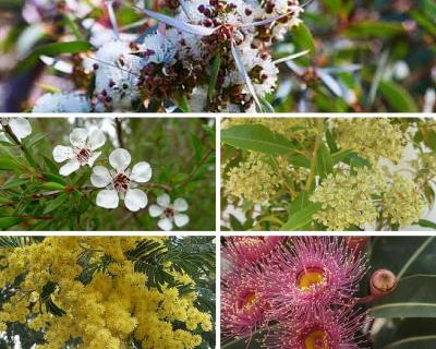 Australian botanical scents.