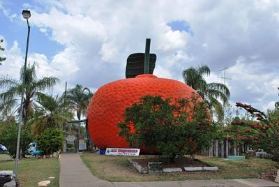Mundubbera Big Mandarin