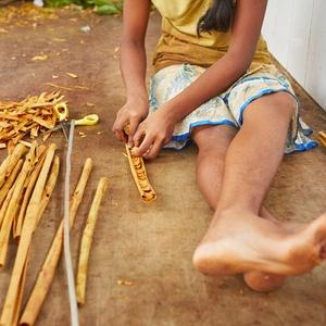 Cinnamon bark processing, Sri Lanka.
